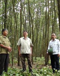 Các hội viên NCT xã Tân Mỹ, huyện Lạc Sơn thực hiện hiệu quả phong trào trồng cây, trồng rừng. Phong trào đem lại môi trường sống trong lành và lợi ích phát triển kinh tế gia đình.